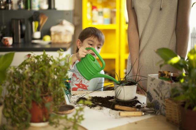 綠色植物吸附甲醛